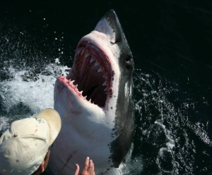 Oh, you saw JAWS - yes, that was me!
