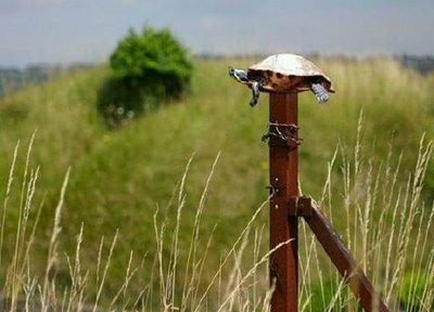 Post Turtle